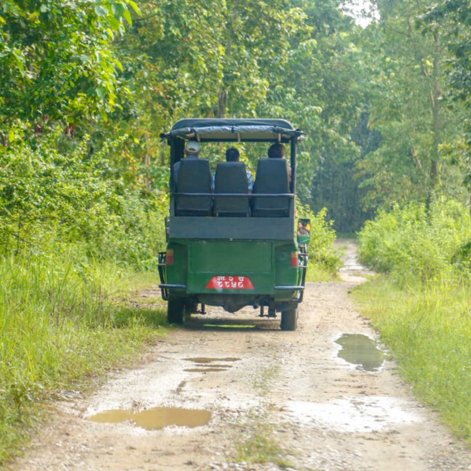jungle safari on jeep